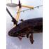 Джиг головки Lida Рыбка с лепестком (3.5г)